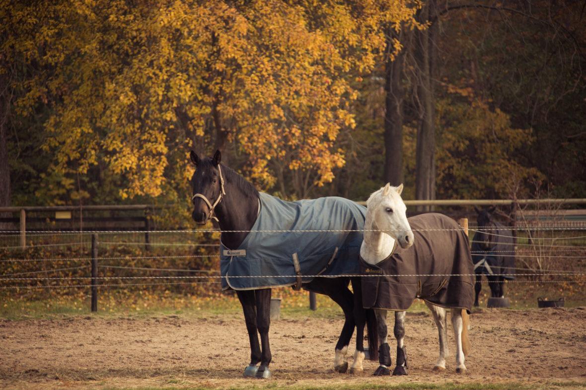 Zwei andere Pferde stehen auf der Koppel.