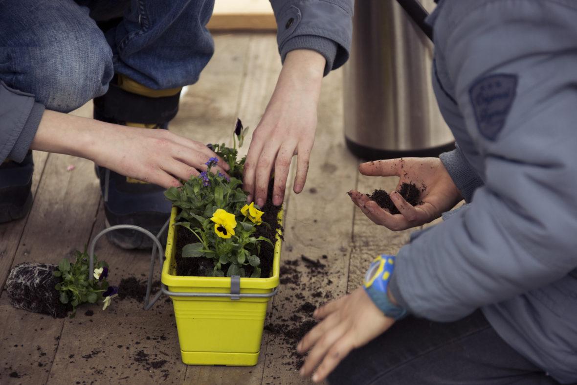 Kinderhände voller Erde, die sie in einen Blumenkasten füllen.