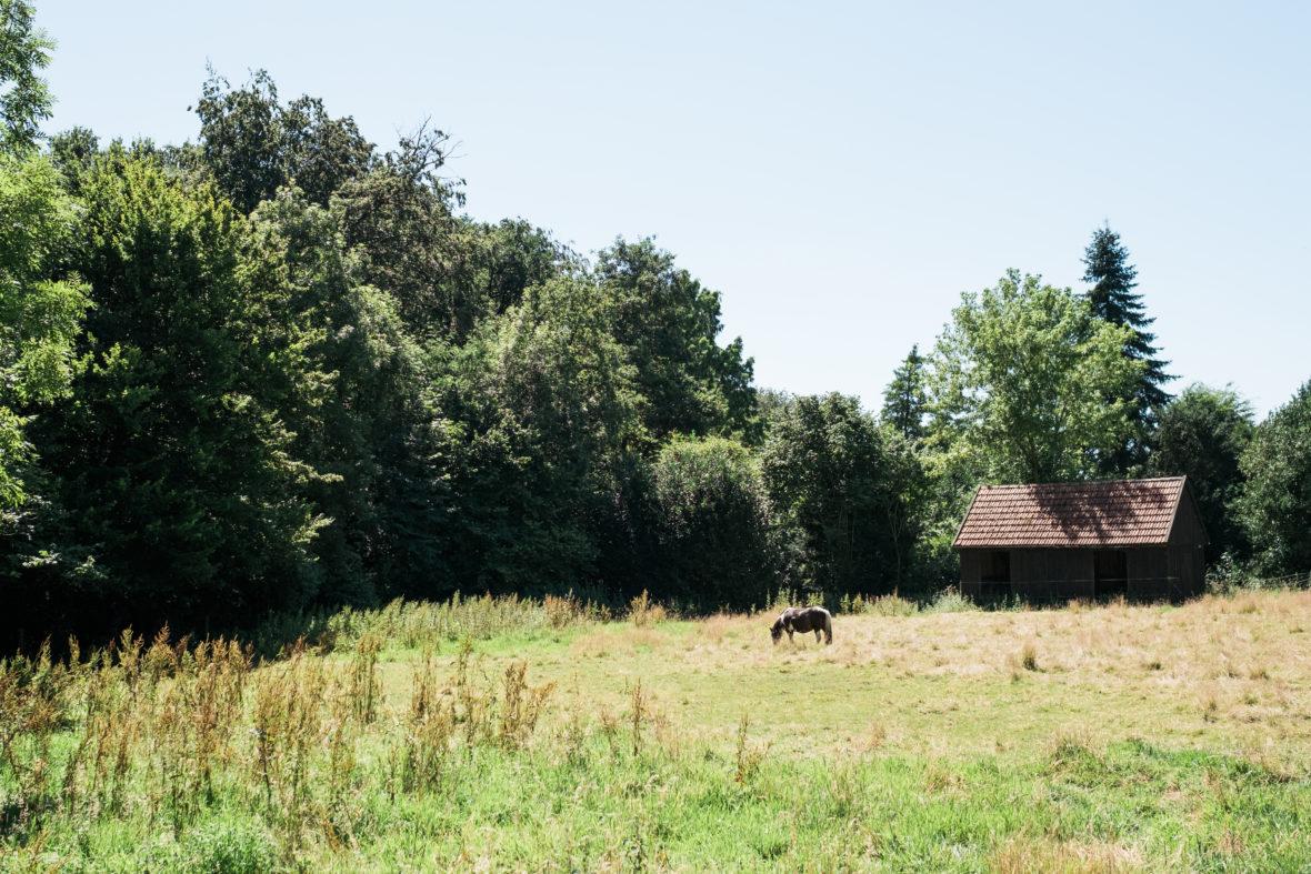 Ein Pferd steht vor einem kleinem Häuschen auf einer Wiese am Waldrand.