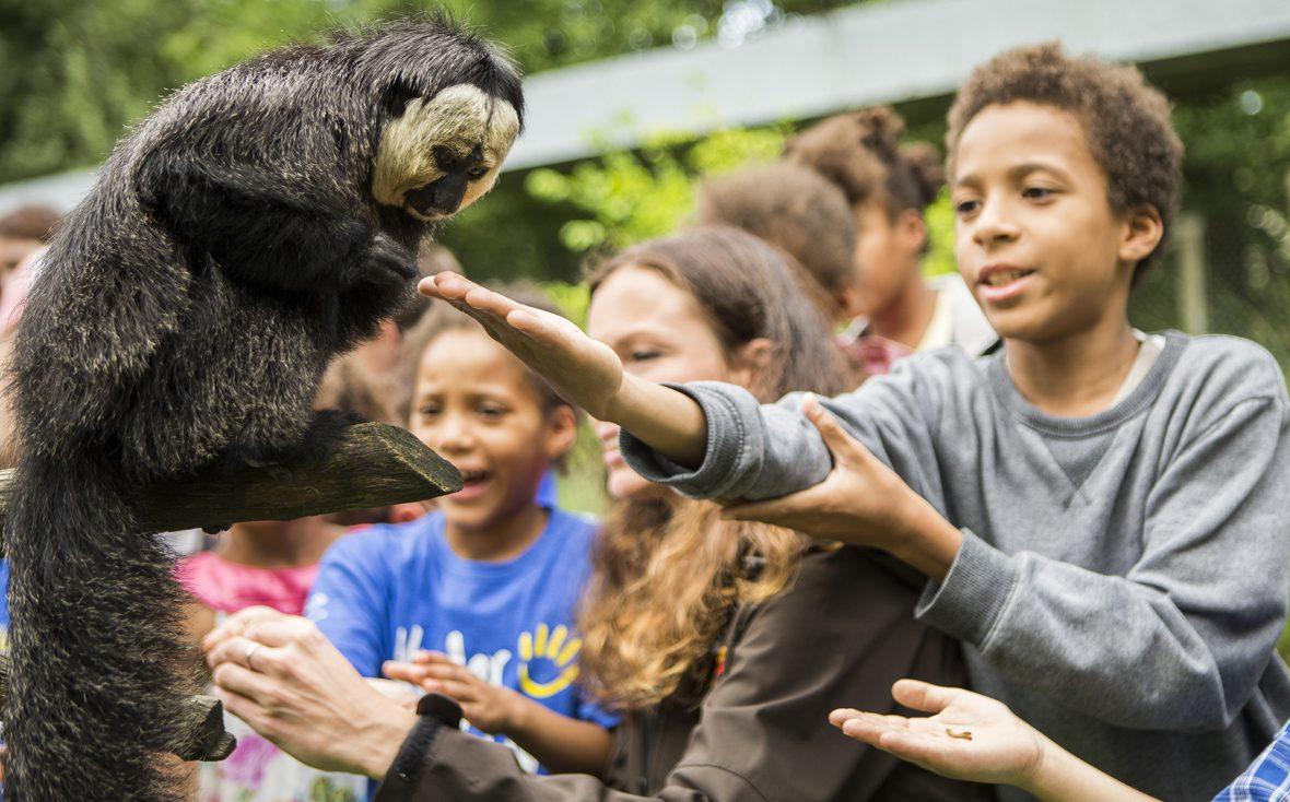 Kinder füttern Affe mit Rosinen im Serengeti-Park
