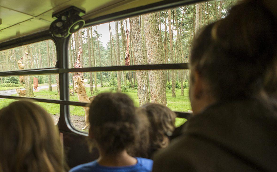 Kinder sitzen im Bus und sehen einer Löwenfütterung zu