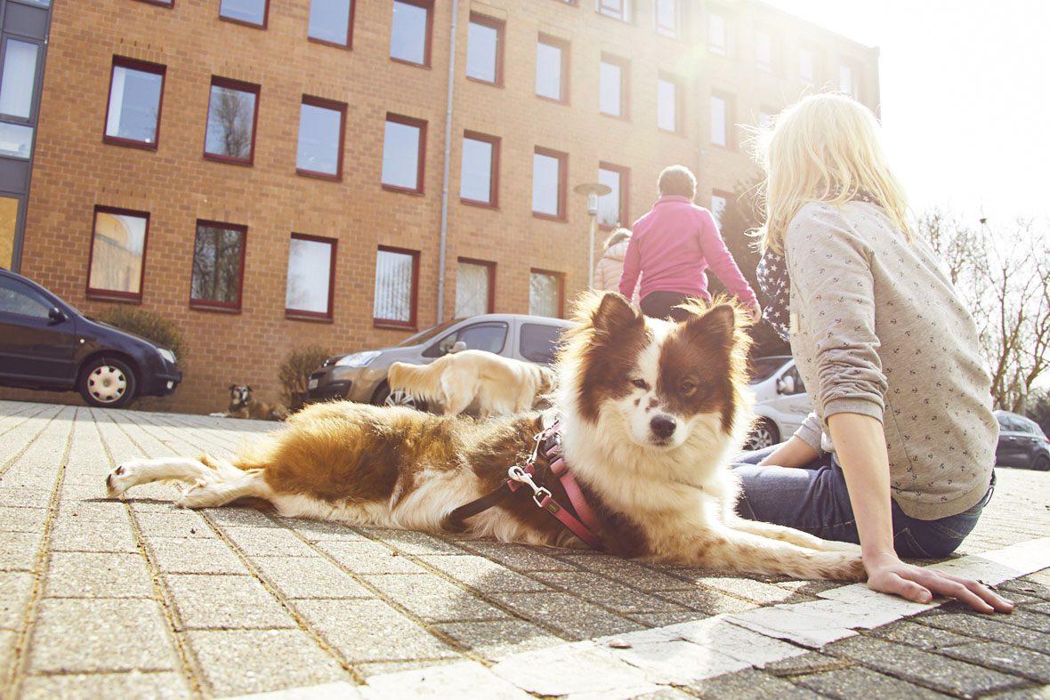 Ein Hund, der am Kurs teilnimmt, liegt in der Sonne neben seiner Halterin.
