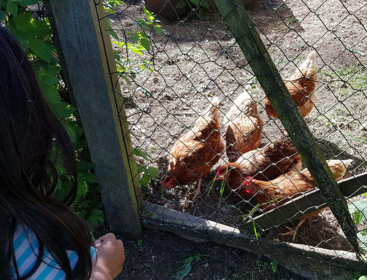 Foto: Fünf Hühner stehen hinter einem Zaun, ein Mädchen sitzt davor.